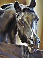 Vintage French Equine Bronze   - Signed SOLD
